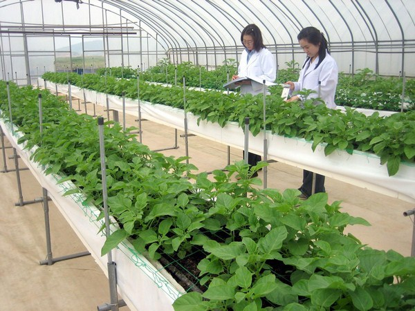 Lao động Nhật bản môi trường nông nghiệp